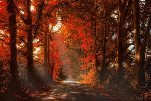 Fall,fire in the forest (by azegbenbalvan, via llbwwb)