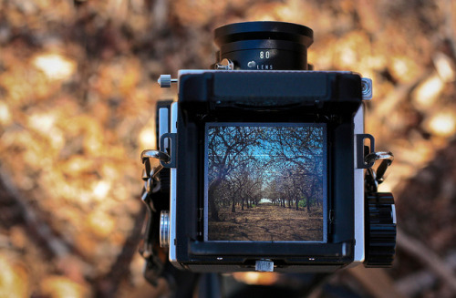 Through the Mamiya. (photo by Monica Saaty)