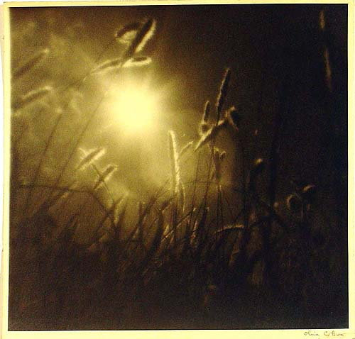 Olive Cotton, Grass at Sundown, 1939.