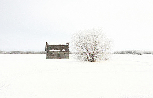 timetruthearts:  Winter Isolation (by Cindy's Here)