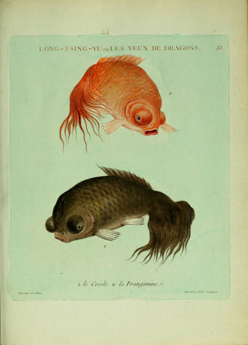 biomedicalephemera:  Bubble-eyes! Histoire naturelle des dorades de la Chine. 1780