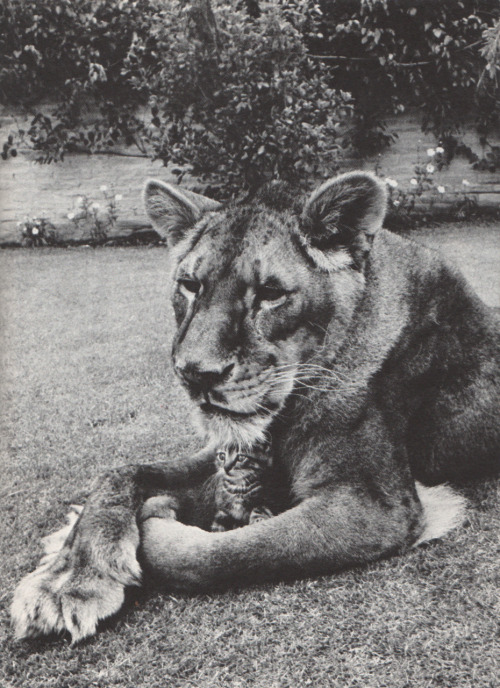 pretty sure that's a cat and a lion, but a very cute picture indeed.
