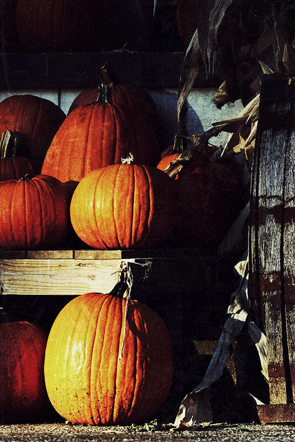 'tis October  on Flickr.Via Flickr: Pumpkins at garden center in Kettering Ohio by Jim Crotty