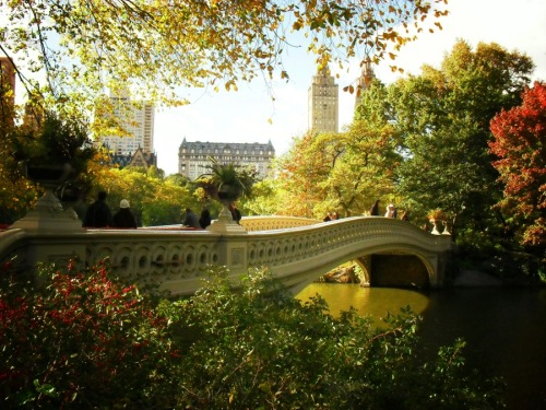 "Bow Bridge at the peak of autumn with a view of the San Remo and the Dakota. Central Park, New York City.  I am really bummed out today since I signed up for the Worldwide Photowalk to attend a photowalk in Queens (my home borough!) today but I had to cancel. I was riding my bike through Central Park two days ago and I wiped out on my bike trying to avoid a jogger who was running in the bike lane who stuck his hand out. In the process I sprained my knee pretty bad. I have been in a knee brace ever since and since I live in a Lower East Side walk up (it's 77 stairs up to my apartment), I have been homebound and probably will be until Monday or Tuesday. It's really hard for me to stay still for this long since I am usually all over the place. In fact, I haven't spent so many consecutive days at home in ages. I am slightly stir-crazy!  I am going through beautiful autumn photos to cheer myself up. I absolutely love the quality of the light during the peak of autumn especially in Central Park. It seems to dance on the colorful foliage making everything look like it has been enchanted with magical dust.   This particular photo is of Bow Bridge, one of the most photographed and beloved of Central Park's many bridges. It is shaped like an archer's bow and is constructed entirely out of cast iron. Built between 1859 and 1862 it spans around 60 feet over Central Park's Lake. The railing (shown here) incorporates architectural elements of Gothic, Neo-Classical and Renaissance design.  The view in this photo is overlooking the beautiful buildings that line Central Park on the west side of the park. The two towered complex is known as the San Remo and it has been the home to Tiger Woods, Steven Spielberg, Donna Karan, Steve Jobs, Demi Moore, Glenn Close,Dustin Hoffman, U2 frontman Bono, Steve Martin, Bruce Willis, and Rita Hayworth just to name a few. The San Remo sits fairly close to another building (in this photo as well) called The Dakota which is where John Lennon was murdered.   —-     —-  Buy ""Bow Bridge Central Park in Autumn"" Prints and Posters here, View my store, email me, or ask for help."