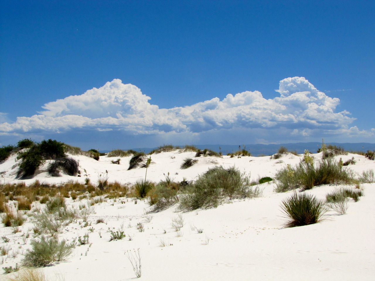 dewdropsonthewindowsill:  White Sands, NM, June 2010