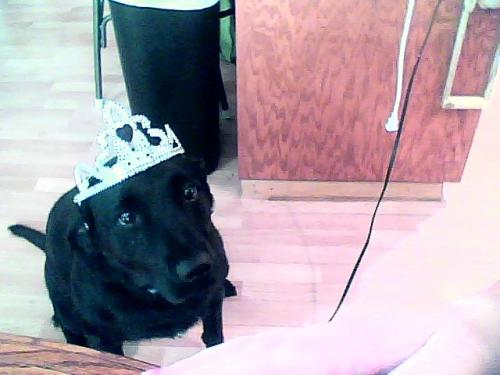 sammy's so cute in her princess crown <3