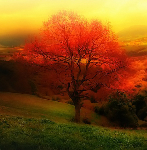 agoodthinghappened:  Nature . Tree . Landscape (L'Arbre des Voeux) by Tiquetonne2067 on Flickr.