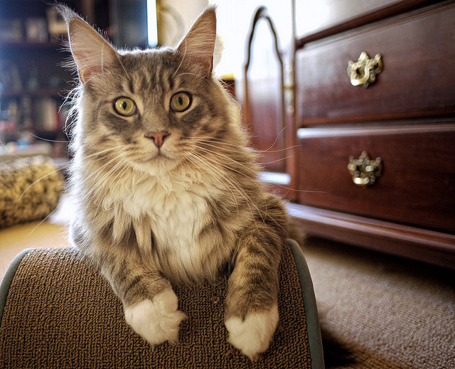 Wolfie's paws look like he is wearing mittens by andertho on Flickr.