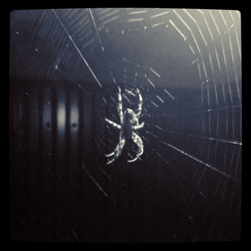 Spider at home (Taken with instagram)