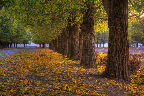 Autumn by M.Shirani on Flickr.