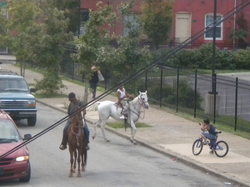 More horses in North Philly.  Found on Berks and 17th. FUCK YEAH HORSES!