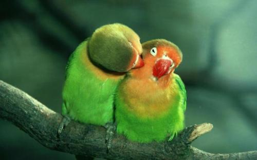 mrhorsepower:  Is that a cheek? Here's a peck (;