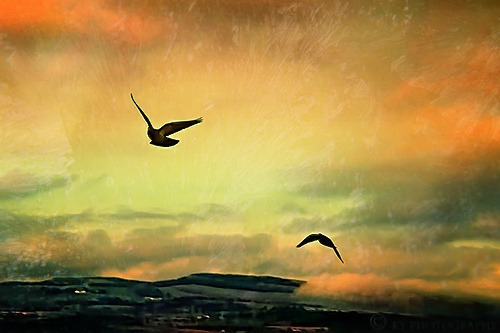 agoodthinghappened:  Together by KY-Photography on Flickr. flying off into the sunset