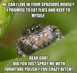 lunatrash:  I love spider housemates <3