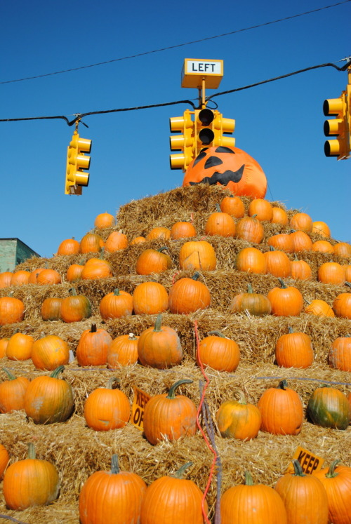 Pumpkinfest! At my hometown there is this big event called pumpkinfest which happens every year and is pretty much the biggest thing in that small town. This year they blocked off all downtown for the festival and they made a pyramid of pumpkins.