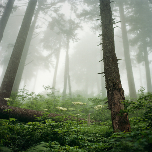 mentalfornication:  softly into the mist by manyfires on Flickr.