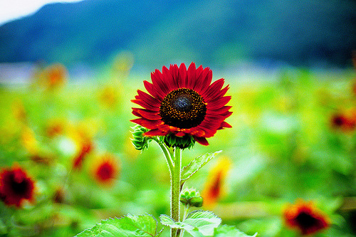 photoholic:  Something New Under the Sun (by moaan)