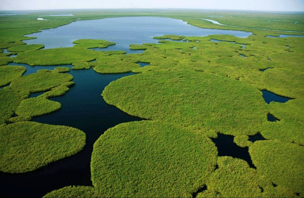 ilots vegetation flottent Sudd Soudan