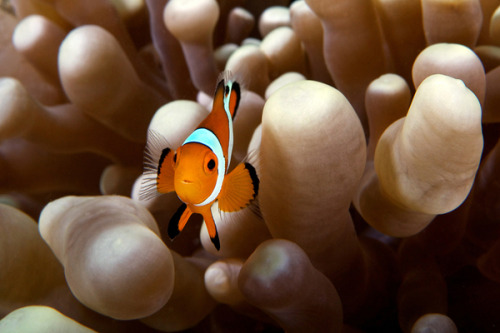 theanimalblog:  (via Underwater Malaysia on Photography Served)
