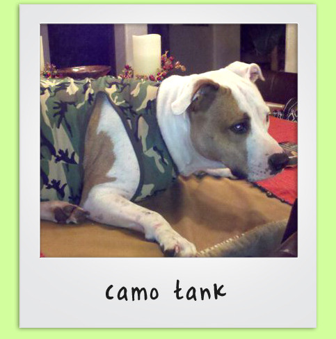 Camo gear is becoming a popular pattern choice to sport. Let your pup in on the trends with his or her own camo items. Pictured above is one of our camo dog tanks that is available in various colors. You can complete the look with camo dog toys or even a camo dog hoodie. Whatever you do, don't miss out!