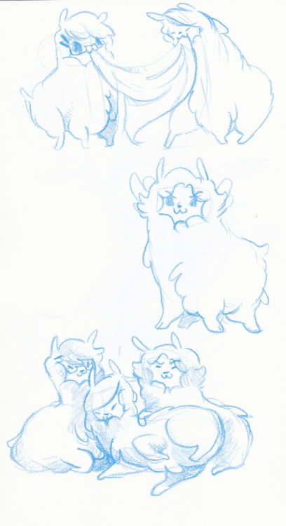 woahkicks:more alpaca group feat marty, LaL, and I