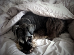 Eames has made himself a little 'dog nest' on this unusually cold Spring day.
