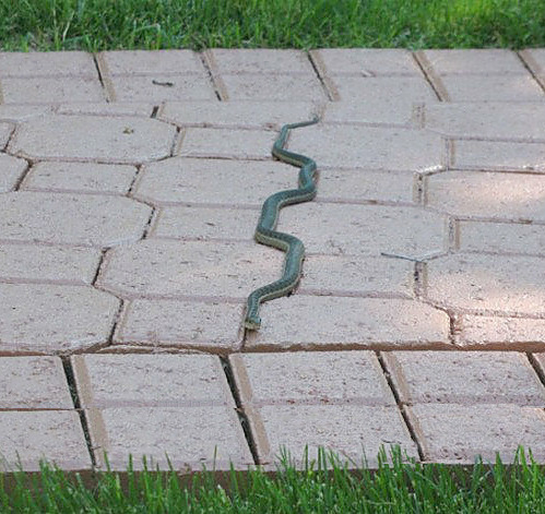 iheartchaos:  When snakes have OCD Via   The caption made this great.