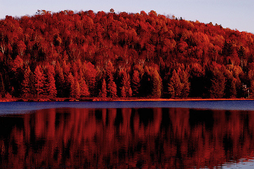 thefilthyyouth:   Autumn Reflection (by judo_dad1953)
