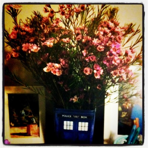 TARDISvase. (Taken with instagram)