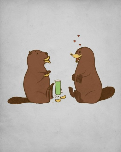 How a beaver flirts with a platypus!