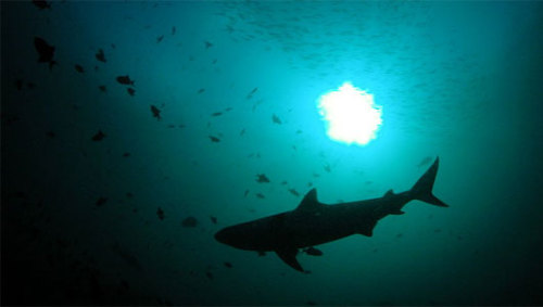 World's largest shark sanctuary opensLocated in the Marshall Islands in the Pacific Ocean, the park is 700,000 square miles of water.