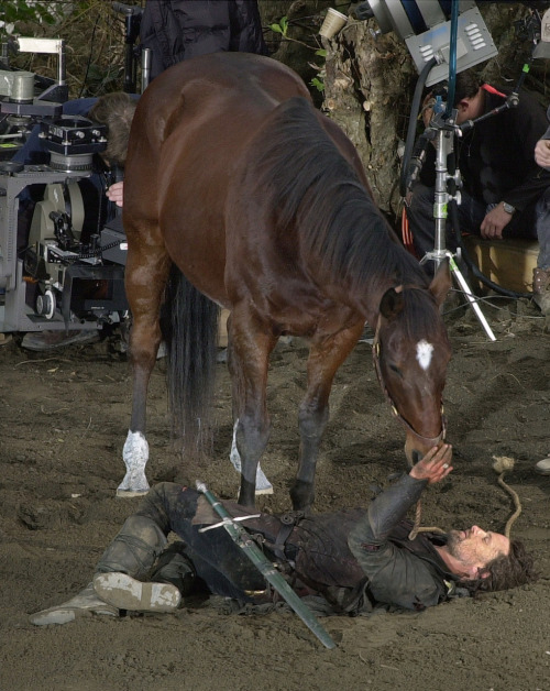 blackpooled:  acollapseddream:  recycleanimals:  Viggo bonded so much with the horse he rode in the Lord of the Rings series that after they finished filming, he purchased the horse from its owner.    He also bought the horse Arwen's stunt double used, and gave it to her to adopt. :) BROSHIP OF THE RINGS INDEED.
