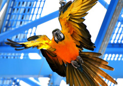 scodal:  I'm loving this parrot photograph