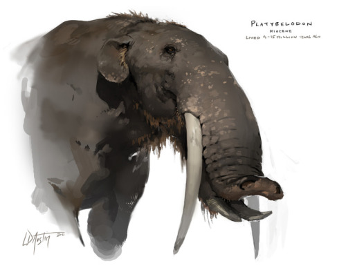 lostbeasts:calmandcurious: Platybelodon (art by tully)