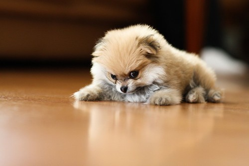 bunnyfood:  THAT FACE  I could have SWORN this puppy had six legs.