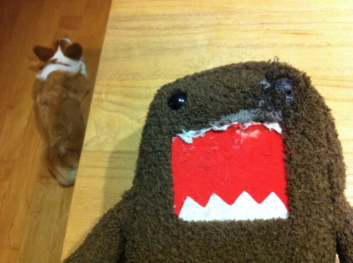 Domo may not recover from his injuries. Corgi sends himself to timeout.