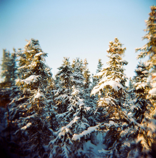 mentalfornication:  The Holga Forest by J.P. EVERETT on Flickr.