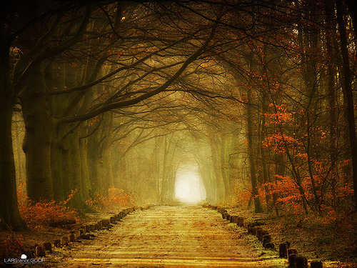 skeletales:  Path of Many by Larsvandegoor
