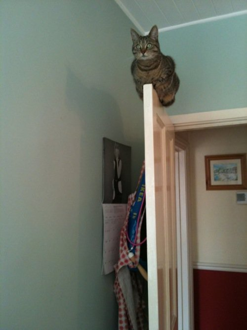 Cat on top of door Source: Ingur Original Article