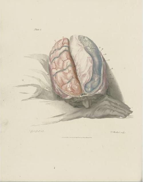 Bell, Charles. The Anatomy of the brain, explained in a series of engravings, 1802 Galerie Bassenge, Decorative Prints, Berlin Germany, Oct 16th