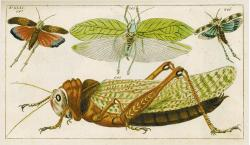 auctionguide:  Wilhelm, Gottlieb TobiasNatural History, Insects I, 1796 Galerie Bassenge, Decorative Prints, Berlin Germany, Oct 19th