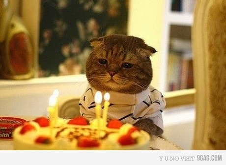 Fuckin Birthday Cat…