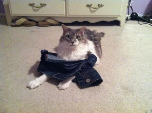 getoutoftherecat:  take those off cat. you do not wear shorts. society is not concerned about you covering up your lady parts in public you are a cat.
