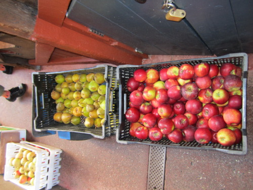 Heirloom apples from Epicenter Orchards in Watsonville