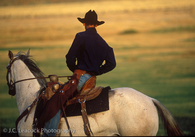 thirtymilesout:  Cowboy Spencer Ingalls, somewhere near Lander, Wyoming (forget the rider, it's the horse!)