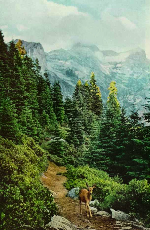 Sequoia National Park, California  National Geographic, 1959