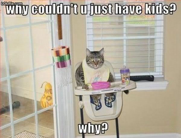 buy hello kitty