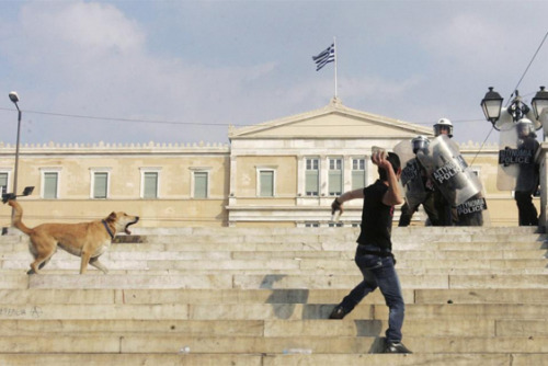 rebeldog:  5 oct 2011, fighting in front of the Greek Parliament at #syntagma