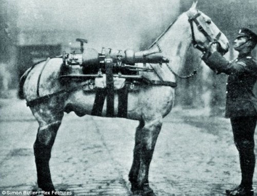 8 Million War Horses, Forgotten Courage @ the Frontline    A few months from now, cinemas worldwide  will be packed for Steven Spielberg's long-awaited film of Michael  Morpurgo's bestseller for children, War Horse.