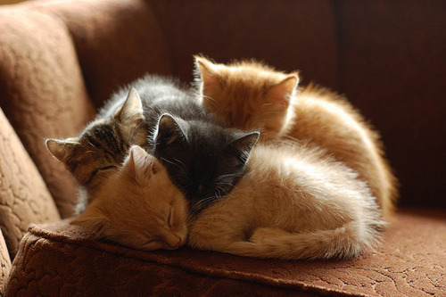 peaceloveandmermaids:  so0o0o0o many kittens… can I has? :3  Awwww!!  A pile of kittens!! All the happy fuzzy is right here I want the gray one on top